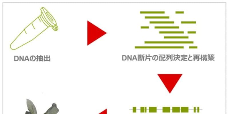 ブリヂストンとNRGene社、新天然ゴム資源「グアユール」のゲノム配列を解読