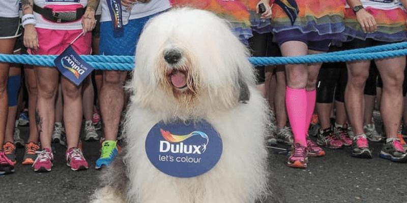 「うちの犬の方がいい仕事するかも」…トッテナム新スポンサーが痛烈ジョークを謝罪