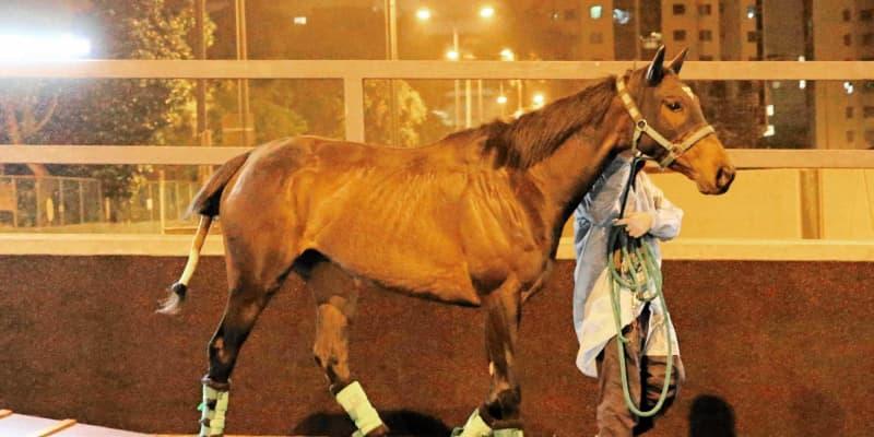【香港チャンピオンズデー】デアリングタクトら日本馬4頭が香港到着