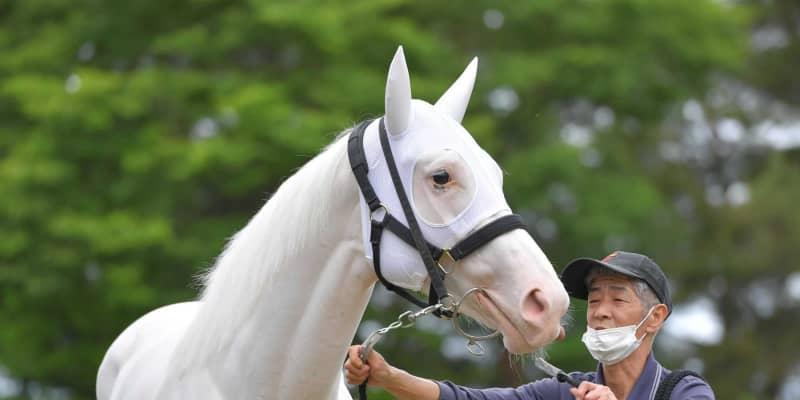 【オークス】白毛馬ソダシ 無敗2冠だ!精神面成長、馬体も進化…偉業達成へ視界良好
