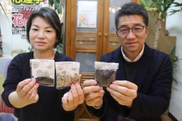 「ど根性ひまわり」の子孫の種を寄贈した野上さん夫妻
