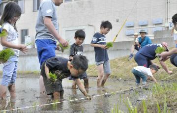 泥だらけになって田植えをする子どもたち=鹿嶋市宮中