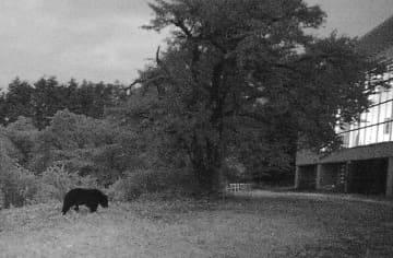 山形県白鷹町の町立鮎貝小学校の敷地内を歩くクマ(左)=11日(同町提供)