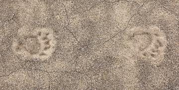グラウンドに残ったクマの足跡=飯豊町・手ノ子小