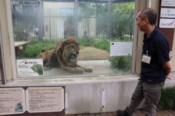 老いたライオンのナイルを見つめる松永さん。「ナイルの幸せとはなにか。飼育員として葛藤もある」と話す(京都市左京区・市動物園)