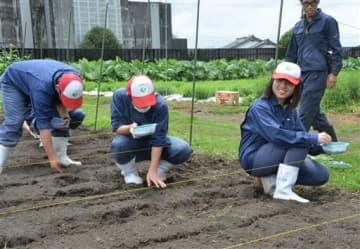 校内の畑に大豆の種をまく南稜高の生徒たち=あさぎり町