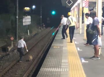 鎌取駅の線路に迷い込んだ犬と捕まえようとする駅員ら(杉本勇樹さん提供)