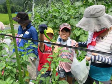 万願寺とうがらしを袋いっぱい収穫した参加者たち(南丹市美山町内久保)