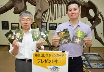 愛川町郷土資料館が月替わりで配布を始めた町内の植物を紹介するコレクションカード=同町半原
