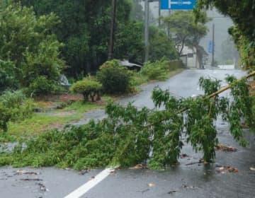 風雨で倒れた竹が県道をふさいだ=6日午前6時56分、竹田市九重野