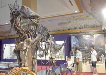 大迫力のアマルガサウルスの全身骨格を展示してる=神栖市大野原