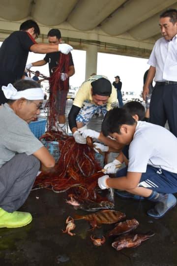 漁業者(左)に教わりながら網に掛かった魚を取る中学生=19日、いすみ市