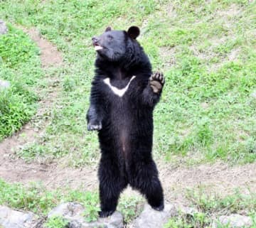 餌を求めて立ち上がり「片手」を挙げる愛らしい姿を見せるリオ