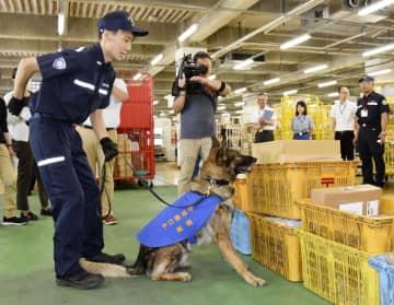 火薬のにおいに反応し、その場に座って知らせる爆発物探知犬「ボルト号」=23日午前、川崎市