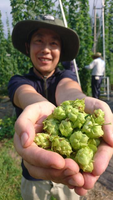 県薬草・地域作物センターが試験栽培に成功したホップ=小林市野尻町