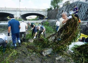 鴨川で繁殖している外来植物「オオバナミズキンバイ」の駆除に汗を流すボランティアら(25日午前10時、七条大橋下流)