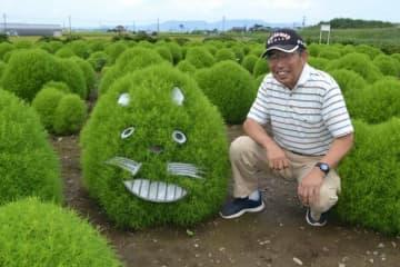 丸々と育ったコキアに表情を付けた福田さん