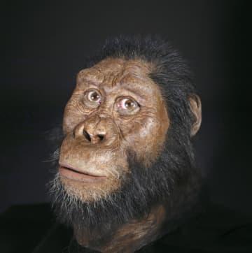 化石から復元された初期人類アウストラロピテクス・アナメンシスの顔(クリーブランド自然史博物館提供・共同)