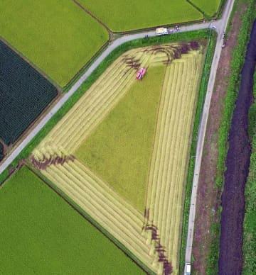 残暑の中、早くも始まった稲刈り=29日午後1時40分、大田原市滝岡、小型無人機から