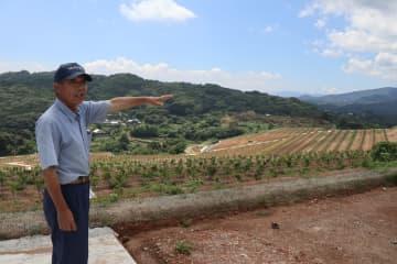 基盤整備して利用しやすくなった農地。「産地を復活できた」と喜ぶ山脇さん=西海市西彼町白崎郷