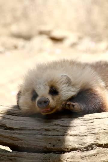 眠ってる姿はこんなに愛らしい…(提供)