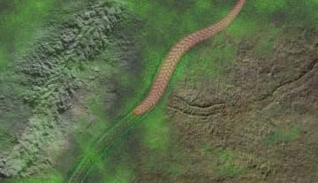 中米の科学者、最古の蠕虫様動物の化石を発見