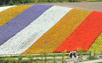 色とりどりの花が咲く「展望花畑 四季彩の丘」=11日、北海道美瑛町