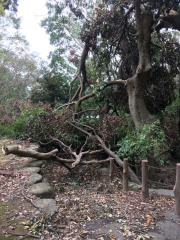掘削現場に向かう階段の手前に、大きな枝が積み重なっていて