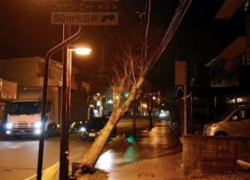 台風17号の強風で傾いた街路樹=22日午後10時45分ごろ、熊本市西区島崎(小野宏明)