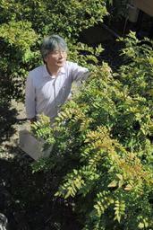 川上商店の店舗裏で栽培される有馬山椒の木=神戸市北区有馬町