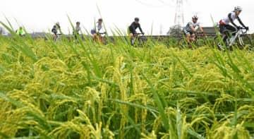 稲刈り前の田園地帯をサイクリングする参加者ら=23日午前、高根沢町石末