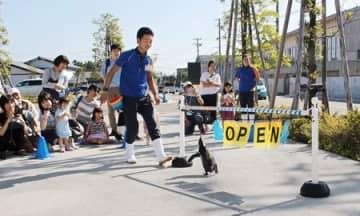 かわいらしいパフォーマンスで開館を宣言するマゼランペンギン=上越市