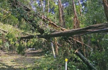 台風15号の影響で倒れ、道路上の電線や電柱を破壊した多数の木=17日、千葉県市原市