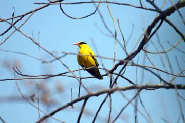 上海ディズニーリゾート、100種類目の野鳥を観察