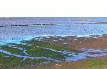 石干見が残る宇佐市長洲の長洲海岸