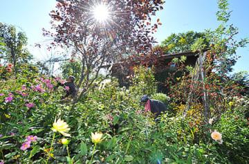 秋晴れの空の下、ペンション自慢の庭を公開する準備が進んでいた=上山市小倉