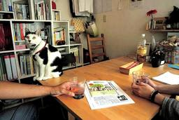 開設1年を迎える「そらにじひめじ」。看板猫の「はる」も癒やし役だ=姫路市二階町
