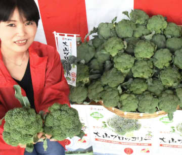 出荷が本格化した「大山ブロッコリー」=7日午前、鳥取県大山町