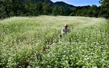 白いかれんな花が一面に咲くソバ畑(京都府京丹波町角)