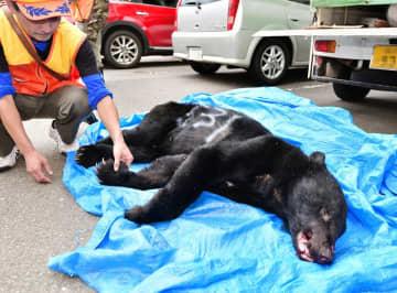 福井県勝山市街地の繊維工場内に侵入し、射殺されたクマ=10月22日午後3時半ごろ、勝山市役所