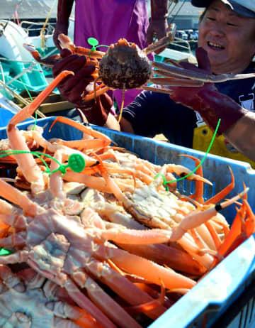 【資料写真】ズワイガニの雄を水揚げする漁師(京都府京丹後市丹後町・間人漁港)