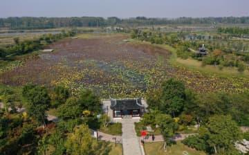 黄河の旧河道が湿地公園に変身 江蘇省徐州市