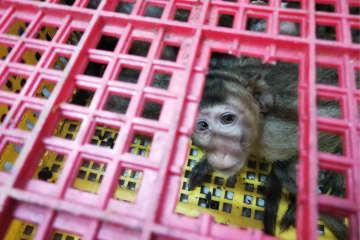 中国最大のカニクイザル密輸事件 2735匹を押収