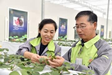 日本の精密農業、山東省威海市に浸透