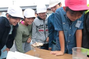 佐世保市水産センターで種苗生産している稚魚などを観察する子どもたち=佐世保市宮津町