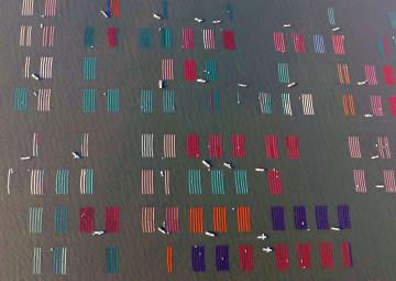 有明海で養殖ノリの種付け作業が始まり、海面に広げられたノリ網=27日午前7時43分、佐賀市沖(共同通信社ヘリから)