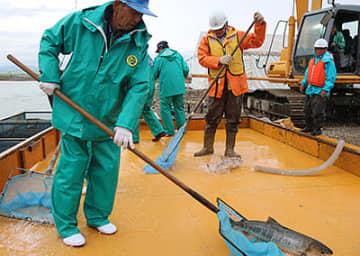 作業台で飛び跳ねるサケを捕獲する協議会メンバーら=高岡市石瀬の庄川左岸