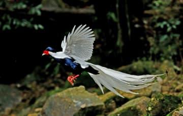 世界に生物多様性を示す銭江源国家公園 浙江省