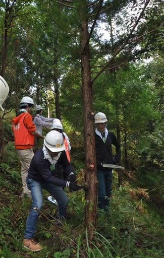 JT森林保全活動で枝打ちをする参加者たち=湯前町
