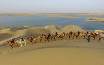 観光客でにぎわう、色づいたコトカケヤナギ林 新疆ロプノール県